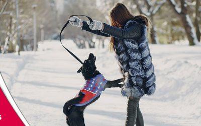 Com protegir el teu gos del fred?