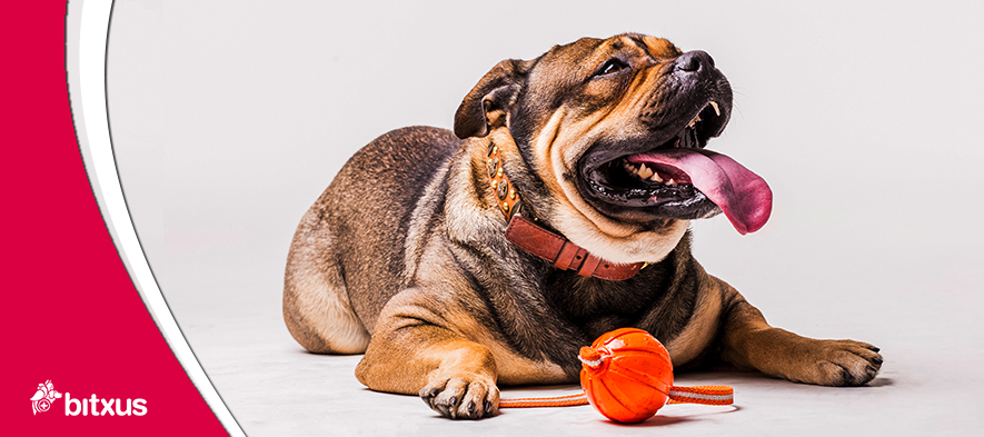 Sabies que el 50% dels gossos i gats estan per sobre del seu pes ideal?