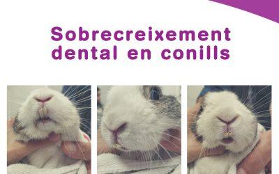 Sobrecreixement dental en conills