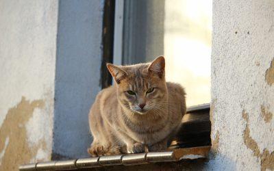 Síndrome del gat paracaigudista