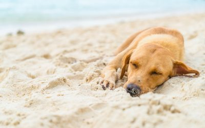 Com evitar un cop de calor en la meva mascota?