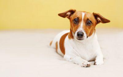 Càncer de pell en els animals
