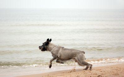 Platges per a gossos a Tarragona – Estiu 2019