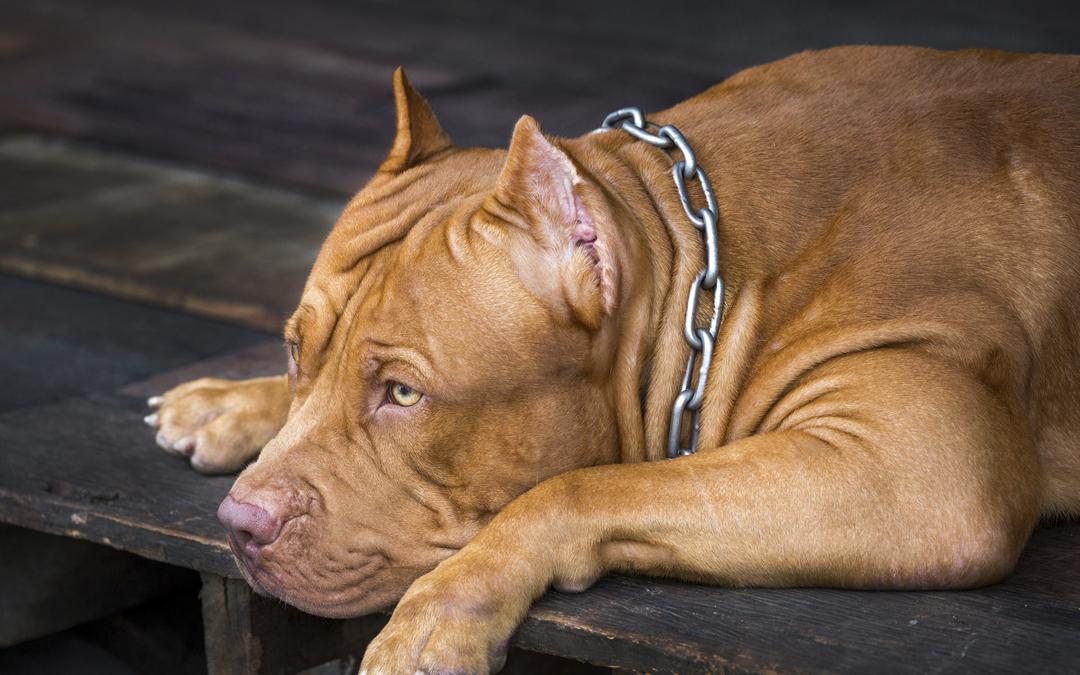 Protecció d'Animals de Companyia