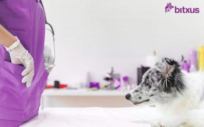 Les al·lèrgies en gossos