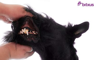 La higiene dental de les mascotes