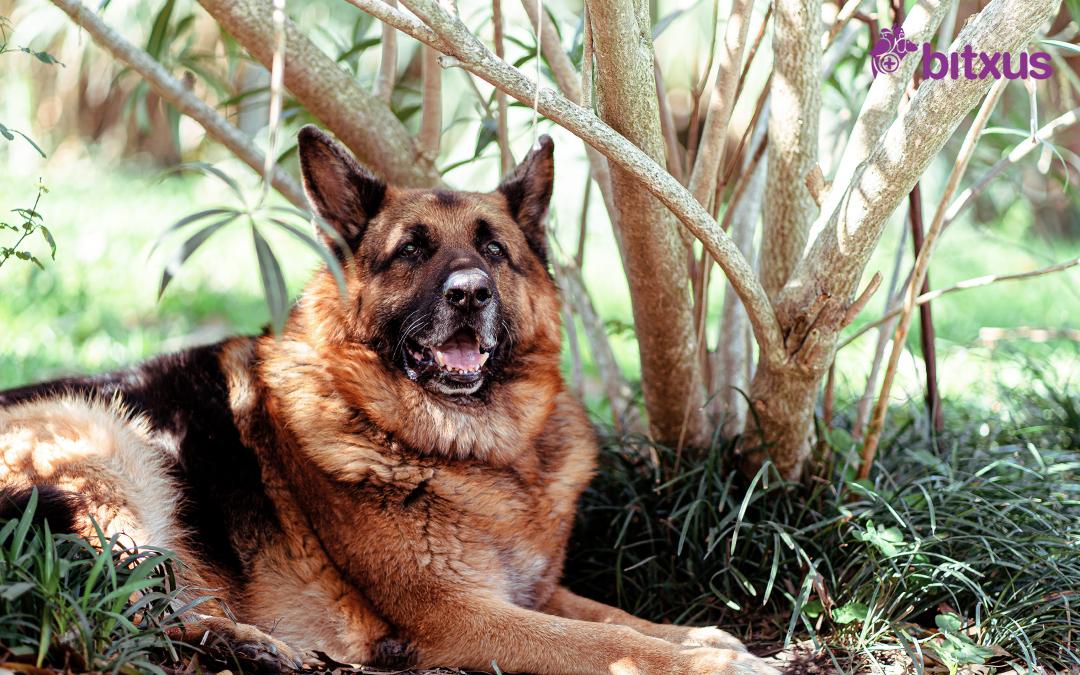 La cura dels gossos vells o ancians: com millorar la seva qualitat de vida?