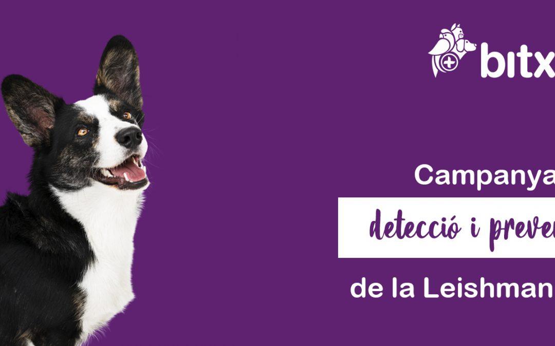 LA LEISHMANIOSI CANINA: definició, símptomes, prevenció i tractament